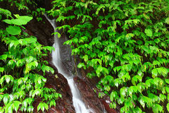 Green Leaves and Waterfall Royalty Free Stock Photo