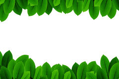 Green leaves on white background Royalty Free Stock Photo