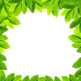 Green leaves on white background Royalty Free Stock Photos