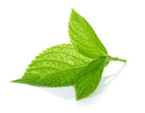Green leaves on white background Stock Image