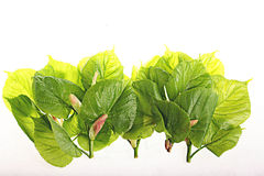 Green leaves on a white background Stock Photos