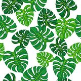 Green leaves on white background. Seamless pattern. Green herb on white background. Seamless pattern vector illustration