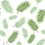 Green leaves on white background. Seamless pattern. Green herb on white background. Seamless pattern royalty free illustration