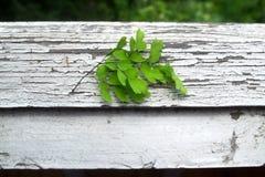 Green leaves. On white cracks Stock Images