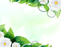 Green leaves and white flowers Royalty Free Stock Photo