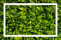 Green leaves with white  frame. Royalty Free Stock Photos
