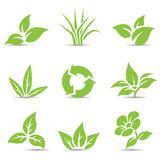 Green Leaves  on white Royalty Free Stock Images