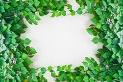 Green leaves on white wall Stock Images