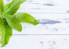 Green leaves on white wooden background. Free copy space.