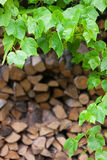 Green leaves of wild plants on the background of wood logs Stock Photo