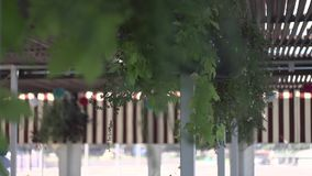 Green leaves. In the wind stock video footage