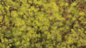 Green leaves on a wind. In the forest stock video footage