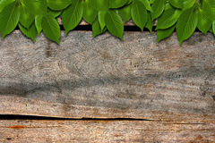 Green leaves on Wood. Green Leaves over Wood background Stock Image