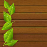 Green leaves on wood Stock Images