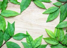 Green leaves on the  wood backgroun Stock Image
