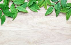 Green leaves on the wood background Royalty Free Stock Photography