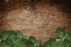 Green leaves on wood texture background Royalty Free Stock Image