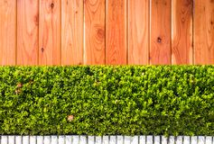 Green Leaves on Wood texture background. Green Leaves on Wood texture on background Stock Images