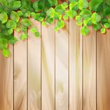 Green leaves on a wood texture. Vector background Royalty Free Stock Photos
