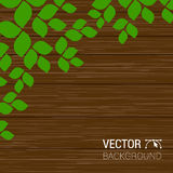 Green leaves on a wood texture. Vector season background with tree branches, wooden textured fence. Stock Photo