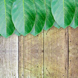 Green leaves on wood wall background Stock Photo