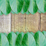 Green leaves on wood wall background Stock Image