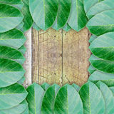 Green leaves on wood wall background Royalty Free Stock Photo