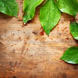 Green leaves on wood Royalty Free Stock Image