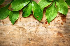 Green leaves on wood. En background Royalty Free Stock Photos