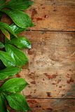 Green leaves on wood Stock Photography