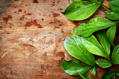 Green leaves on wood Royalty Free Stock Photography