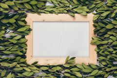 Green leaves and wooden frame background royalty free stock photos