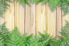 Green Leaves On Wooden With Spaces For Text, Nature Border.  stock images
