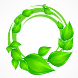Green leaves wreath Royalty Free Stock Photo
