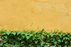 Green leaves on yellow wall Royalty Free Stock Photos