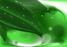 Green leavs and dew on abstract background. Hi res wallpaper Royalty Free Stock Photos