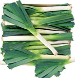 Green leek in a box background Stock Images