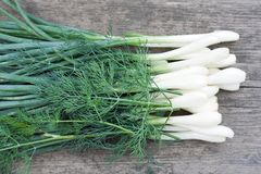 Green leek with dill Stock Photos