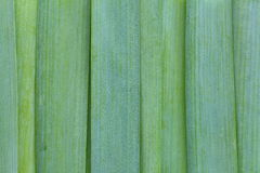 Green leek Stock Photography