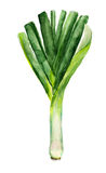 Green leek Royalty Free Stock Image