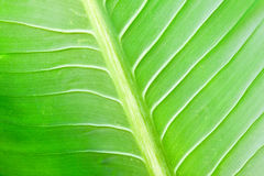 Green lefs of tropical flower Stock Image