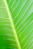 Green lefs of tropical flower Stock Photos