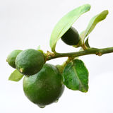 Green lemon Stock Photos