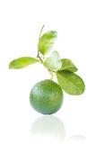 Green Lemon. With Leaf   On White Background Royalty Free Stock Photography