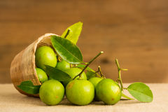 Green lemon Stock Images