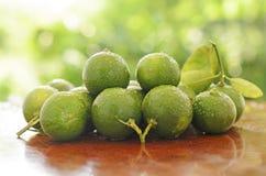 Green lemon Royalty Free Stock Images