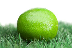 Green lemon on grass Royalty Free Stock Photos