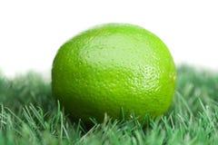 Green lemon on grass royalty free stock photos
