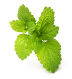Green lemon melissa, mint leaves Royalty Free Stock Photo