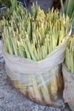 Green lemongrass tree Stock Images